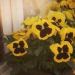 Vintage Flowers Background — Stock Photo #11101784