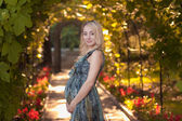 A beautiful pregnant girl in a park at sunset — Stock Photo
