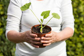 Woman with a young cucumber plant — Stock Photo