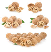 Set of nuts isolated on white — Stock Photo