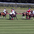 Polo match — Foto Stock