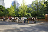 Horse drawn carriages — Stock Photo