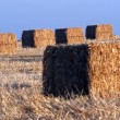 Hay Bales in a Field — Stock Photo