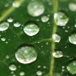Dew Drops on a Green Leaf — Stock Photo