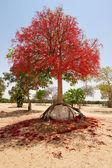 árboles en forma — Foto de Stock