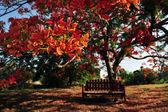 Red Orange Frangipani Temple Tree — Stock Photo