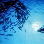 Sea Sport -Scuba Diving — Stock Photo #10799970