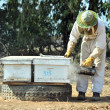 Stockfoto: Israel's Honey Industry