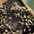 Stock Photo: Israel's Honey Industry