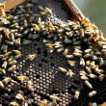 Israel's Honey Industry — Foto de Stock