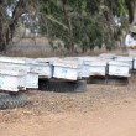 Israel's Honey Industry — Zdjęcie stockowe
