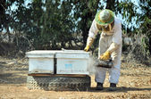 Israel's Honey Industry — 图库照片
