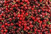 Close Up of Cherries — Stock Photo