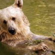 Wildlife Photos - Bear - Stock Photo