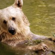 Wildlife Photos - Bear — Stock Photo