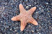 Wildlife Photos - Marine Life — Stock Photo