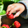 Fruits and Vegetables - Garden Strawberry — Stock Photo