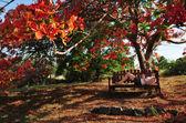Nature Photos - Trees — Stock Photo