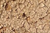 Dry Cracked Earth Texture - Drought — Stock Photo