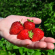 Fruits and Vegetables - Garden Strawberry — Stock Photo #10943030