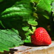 Fruits and Vegetables - Garden Strawberry — Stock Photo #10944150