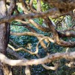 Nature - Pohutukawa Tree — Photo