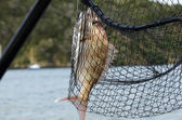 Sport and Recreation - Fishing — Stock Photo