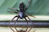 Wildlife and Animals - Spiders — Stock Photo