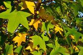 季節の写真 - 秋 — ストック写真