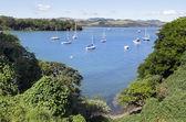 ニュージーランド旅行の写真 - ベイ オブ アイランズ — ストック写真