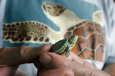 Wildlif and Animals -Sea Turtle — Stock Photo