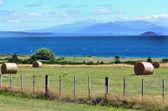 New Zealand - Travel Photos — Stock Photo