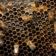 Bees Beehive - Stock Photo
