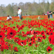 Stock Photo: Travelers in Flowering Field