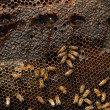 Stock Photo: Bees Beehive
