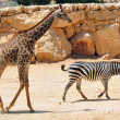 Stock Photo: Jerusalem Biblical Zoo