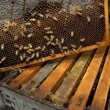 Bees Beehive — Stock Photo