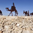 Camel Statues in the Negev, Israel — Stock Photo #11116881