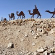 Camel Statues in the Negev, Israel — Stock Photo #11116885