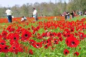 Travelers in Flowering Field — Stock Photo