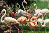 Jerusalem Biblical Zoo — Stock Photo