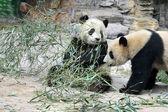 Beijing-Peking China — Stock Photo