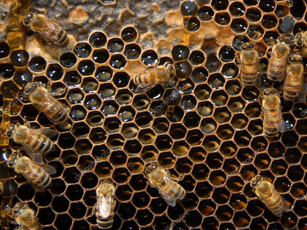 A close up view of working bees in a beehive producing honey on honey cells. — Foto Stock #11116198