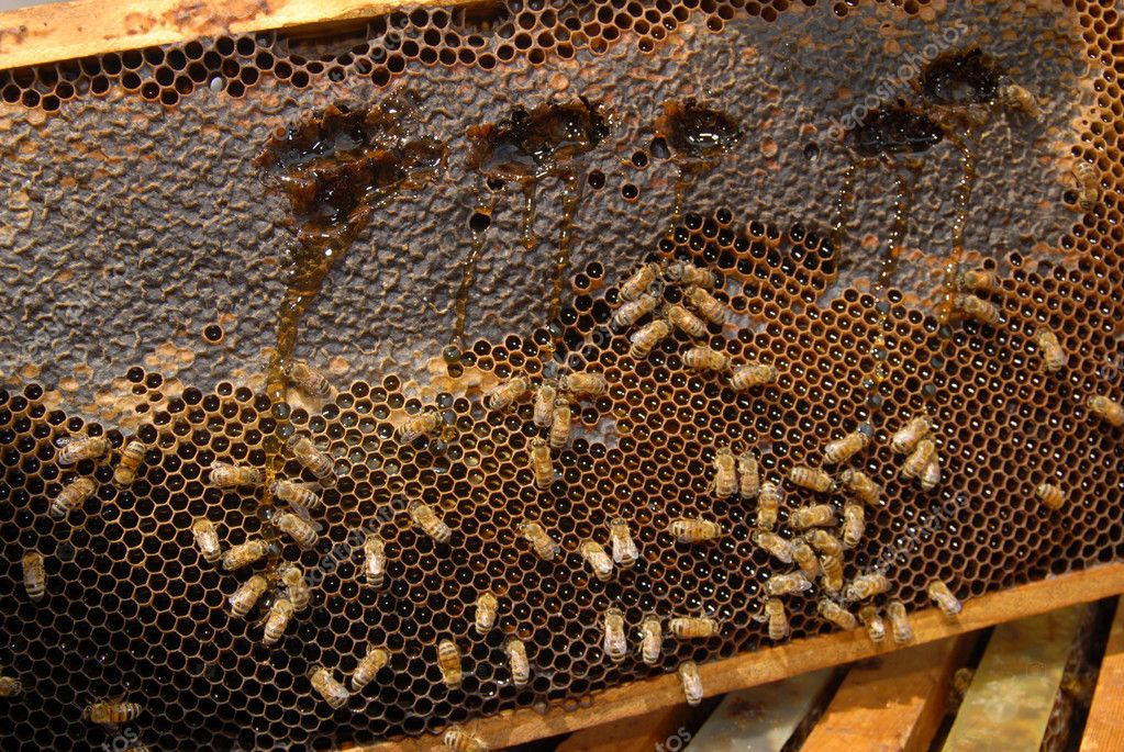 A close up view of working bees in a beehive producing honey on honey cells. — Stock Photo #11116361
