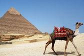 Pyramid of Chefren, Giza, Egypt — Stock Photo