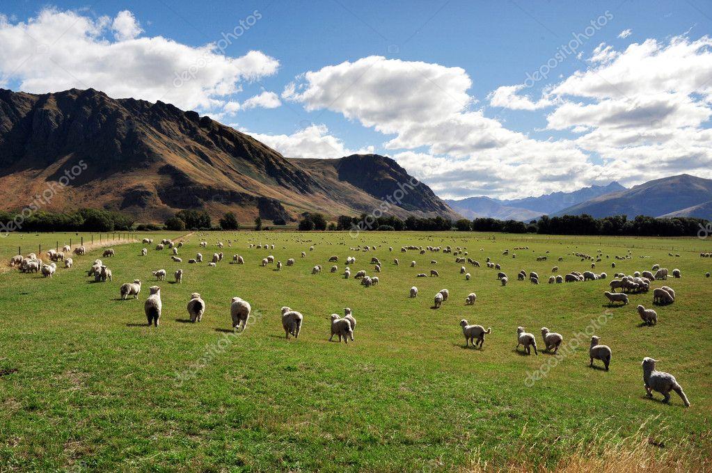 Azienda agricola isola del sud nuova zelanda foto stock for Piani di fattoria del sud