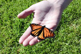 Monarch Butterfly — Stock fotografie