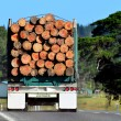 Logging truck — Stock Photo
