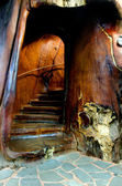 Staircase carved inside a kauri tree — Stock Photo