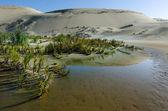 Te паки песчаные дюны — Стоковое фото